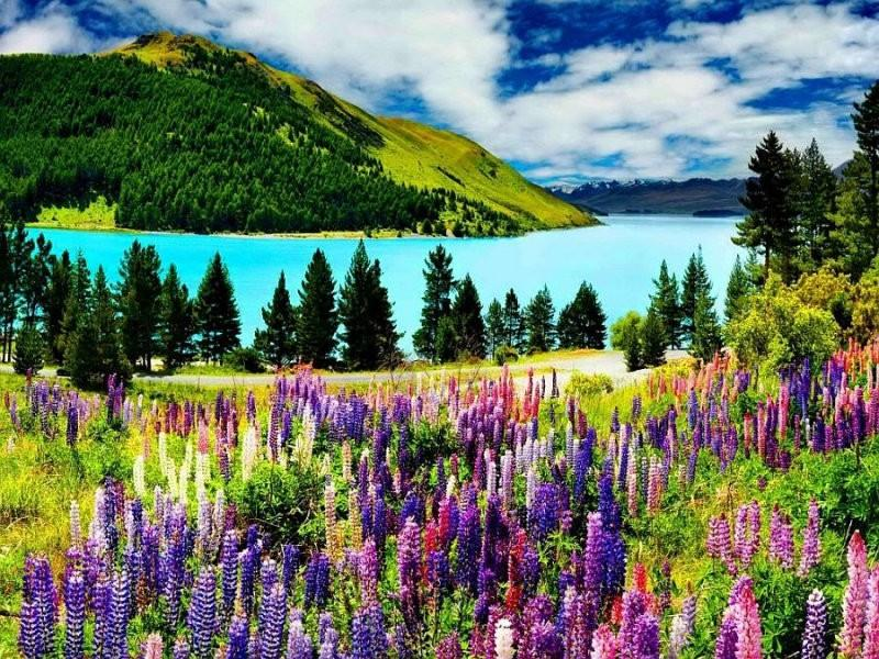 Пейзажи природы с цветами