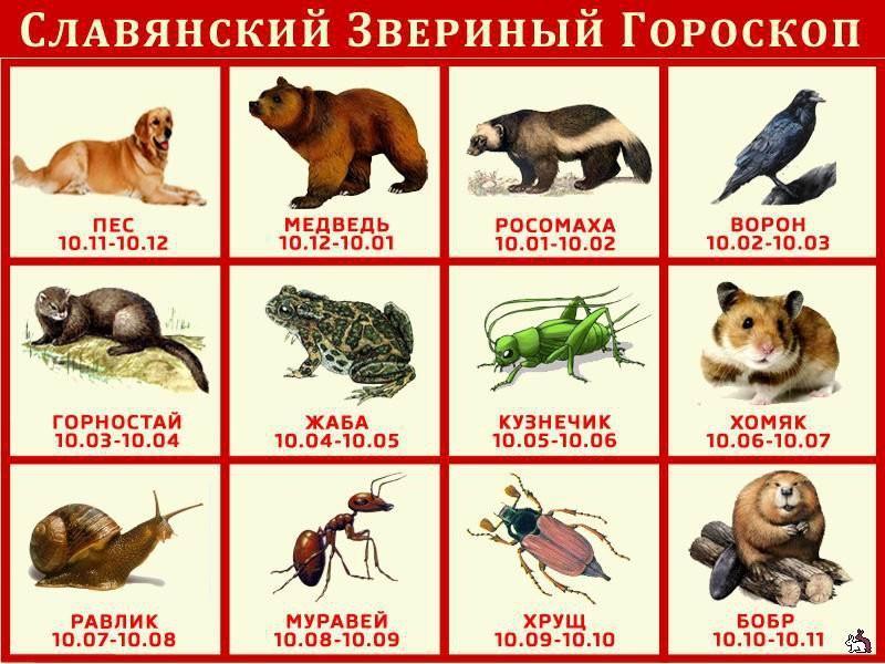 Славянский гороскоп по годам рождения