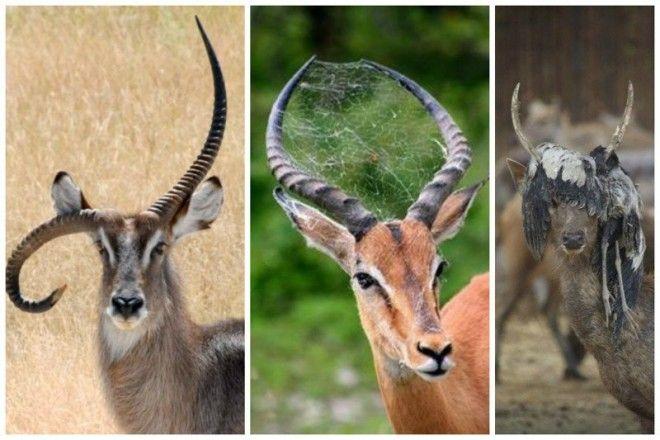 Убийственно шикарные рога интересное красота природа рога флора