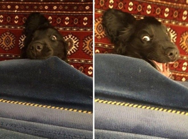 9 Эта игривая девчонка просто счастлива животные собаки фото юмор