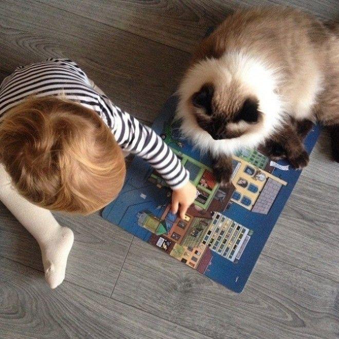 Очаровательные фото доказывающие что каждому ребенку нужна кошка