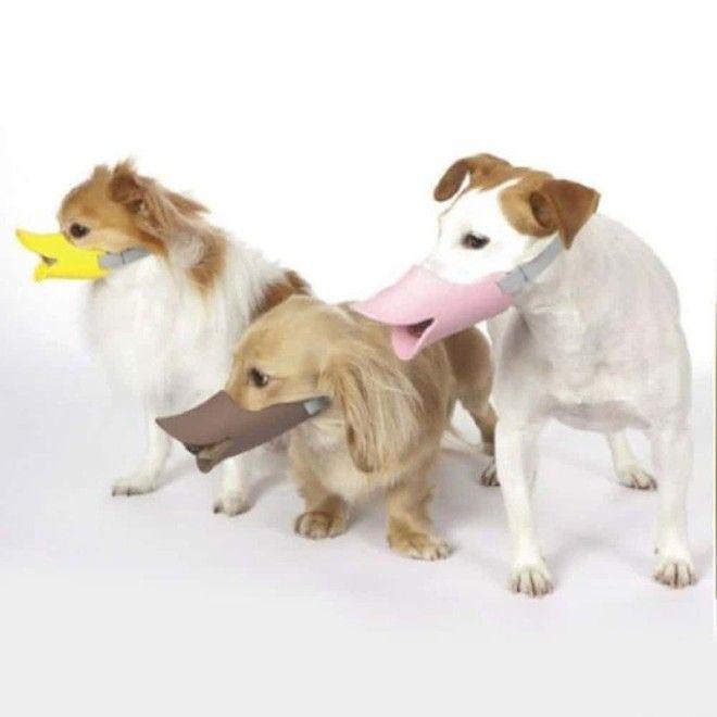 8 Утиный намордник для собаки безумные вещи изобретатели изобретения ненужные вещи