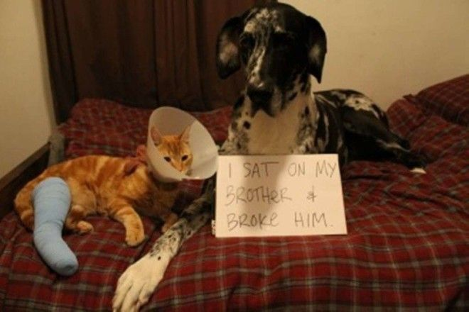 Я сел на моего брата и сломал его ветеринария животные помощь животным