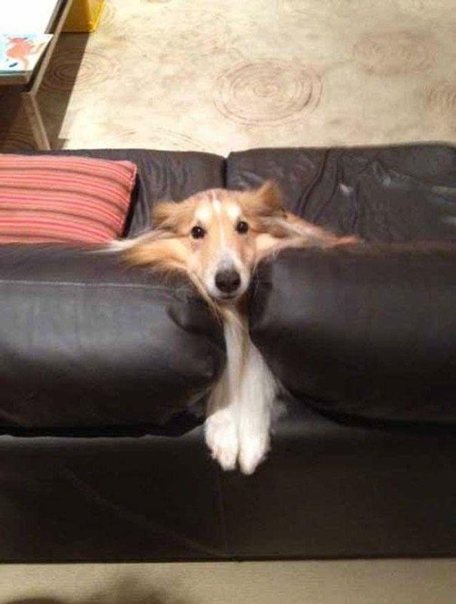 13 Я так рада тебя видеть человек животные собаки фото юмор