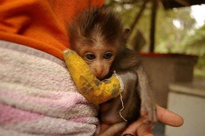 Несчастная обезьянка ветеринария животные помощь животным