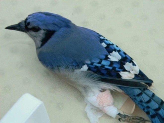 Птицам тоже бывает необходимо лечение ветеринария животные помощь животным