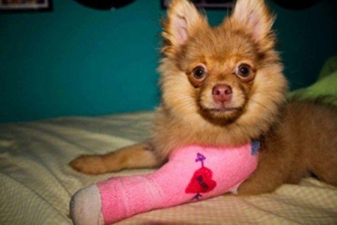 Любящие хозяева раскрасили гипс ветеринария животные помощь животным