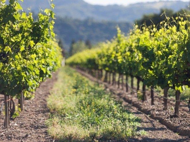 Страны где делают лучшее в мире вино