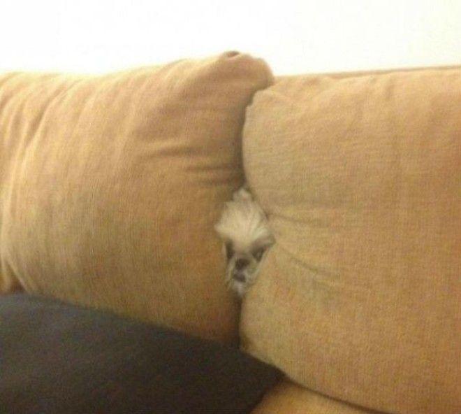 5 Как будто так и должно быть животные собаки фото юмор