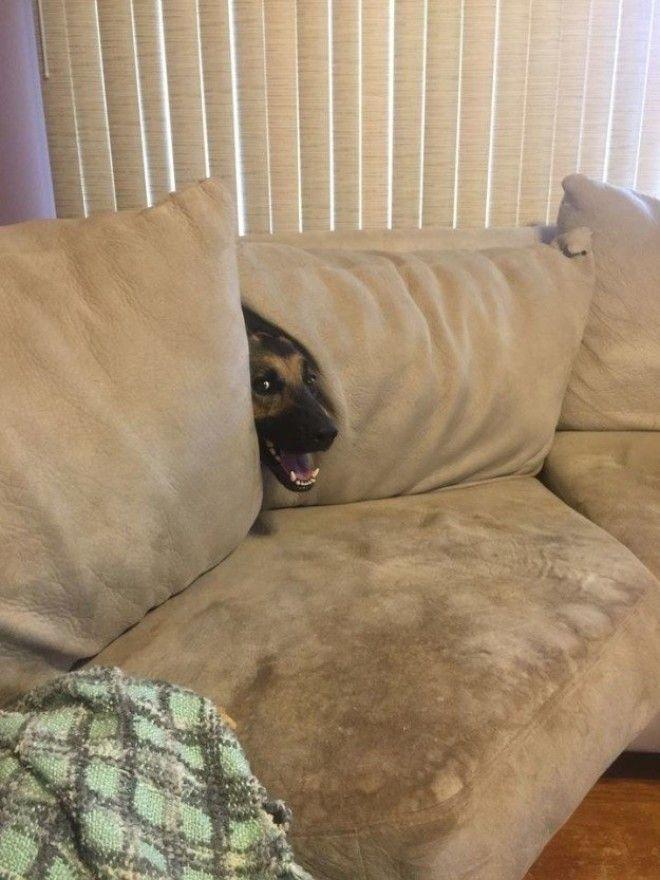 10 Хорошая мина при плохой игре животные собаки фото юмор