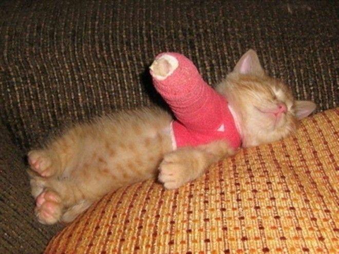 Выздоравливающий котенок ветеринария животные помощь животным