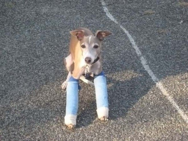 Хозяин все будет хорошо ветеринария животные помощь животным