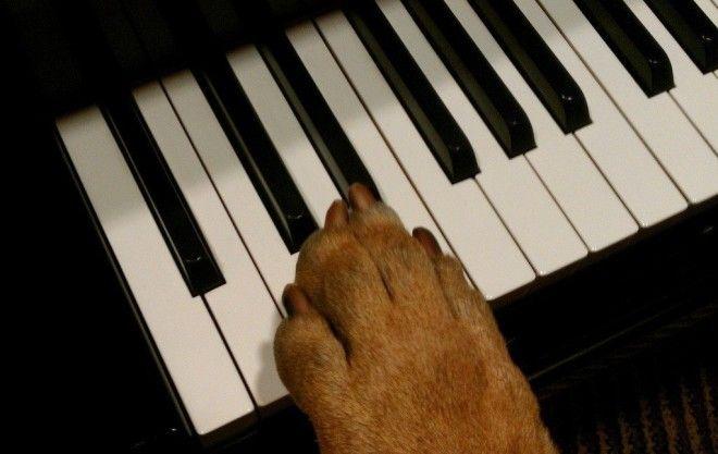 Собачий вальс Шокирующие подробности вальс животные история музыка прикол факты