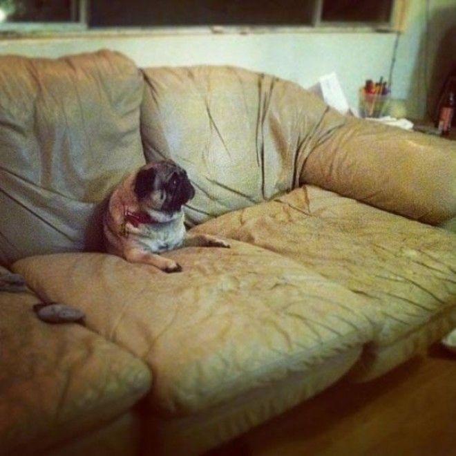 14 Просто расслабьтесь и получайте удовольствие животные собаки фото юмор