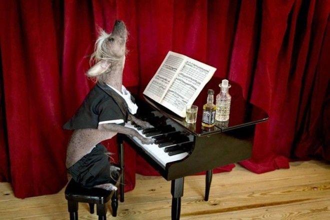 Факт 3 вальс животные история музыка прикол факты