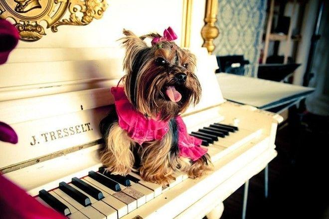 Факт 2 вальс животные история музыка прикол факты