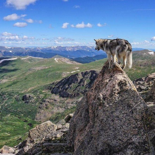 Собака путешествует со своим хозяином
