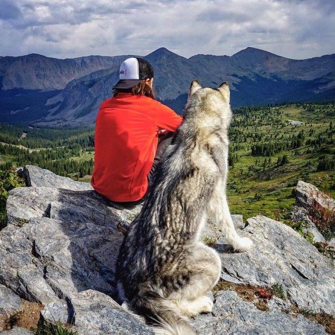 Пес путешествует со своим хозяином