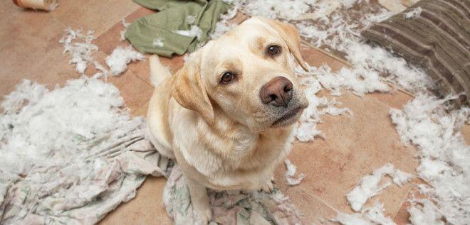 Это все подушка виновата дом животные проступок шалость