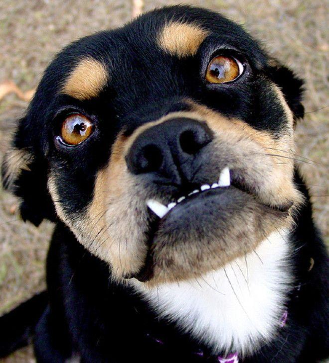 Животные чья нижняя челюсть живет своей жизнью