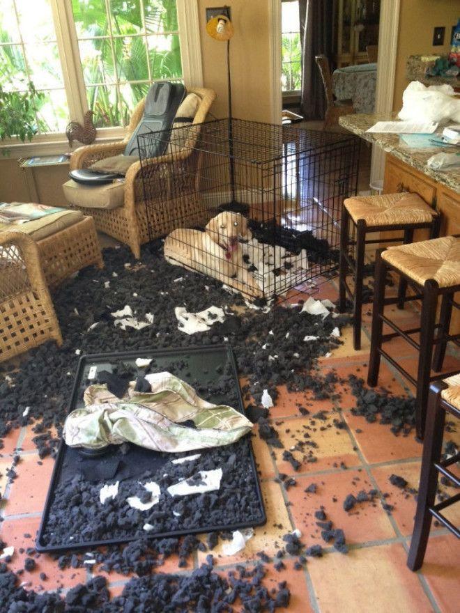 Когда хозяин пошел обедать в кафе дом животные проступок шалость