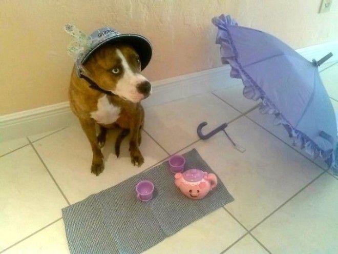 5 Оставила племянницу с собакой на 20 минут вернулась и увидела это животные кошки прикол собака