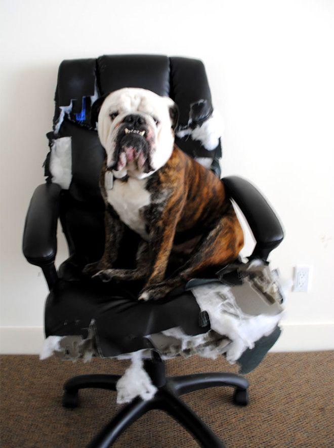 Проверил новое кресло дом животные проступок шалость