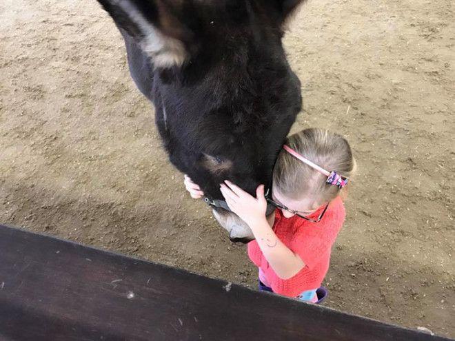 Животная терапия: немая девочка заговорила благодаря ослику