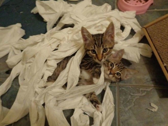 Игры с туалетной бумагой дом животные проступок шалость