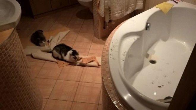 Когда только вымыл ванну дом животные проступок шалость