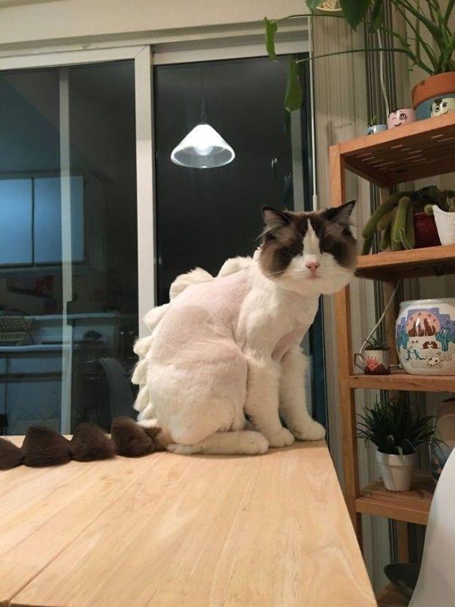 2 Я попросила друга отвезти котика к парикмахеру животные кошки прикол собака