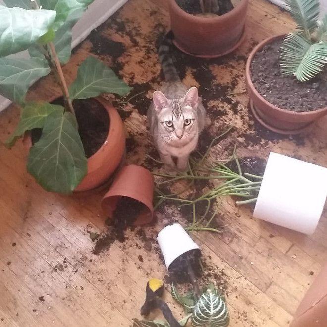 Такая вот любовь к растениям дом животные проступок шалость
