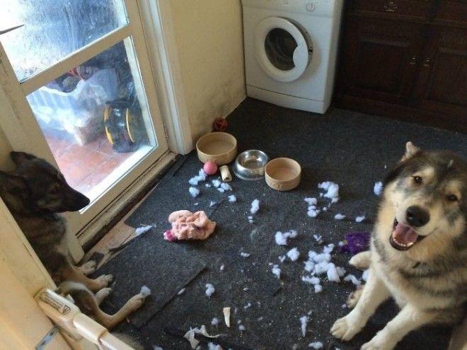 Ктото убил игрушку дом животные проступок шалость