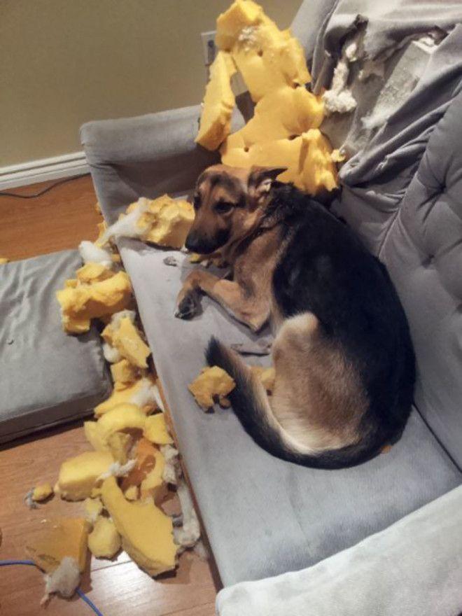 Нападение на диван дом животные проступок шалость
