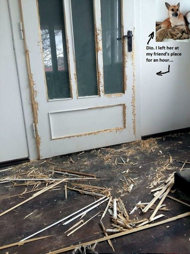 Работа по дереву собаки по кличке Дио дом животные проступок шалость