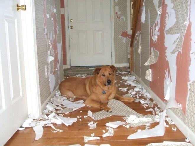 Как прошел твой день хозяин дом животные проступок шалость
