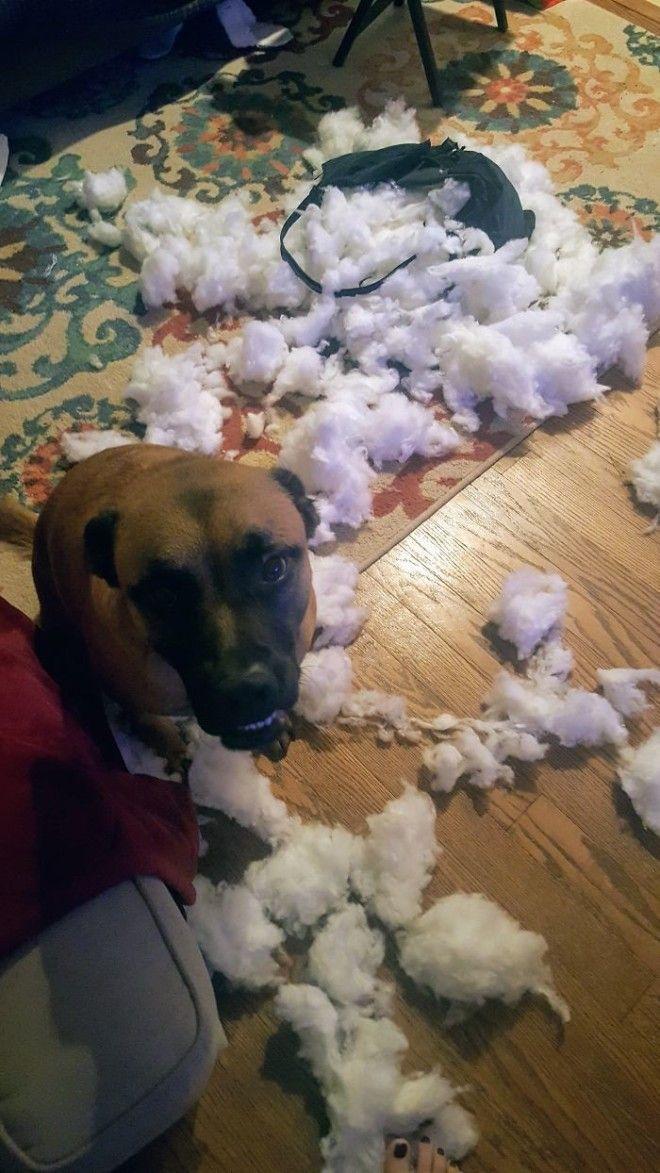 Теперь диван остался без подушек дом животные проступок шалость