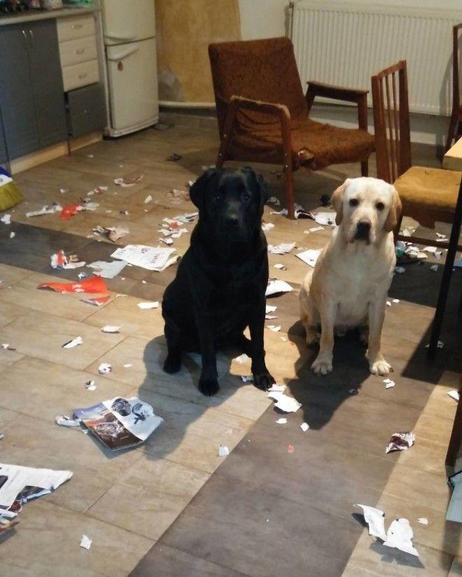 Оставили на 10 минут без внимания дом животные проступок шалость