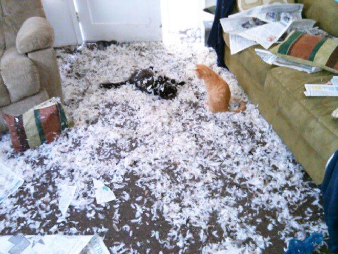 Собака расправилась с новой подушкой а коты устроили себе веселье дом животные проступок шалость