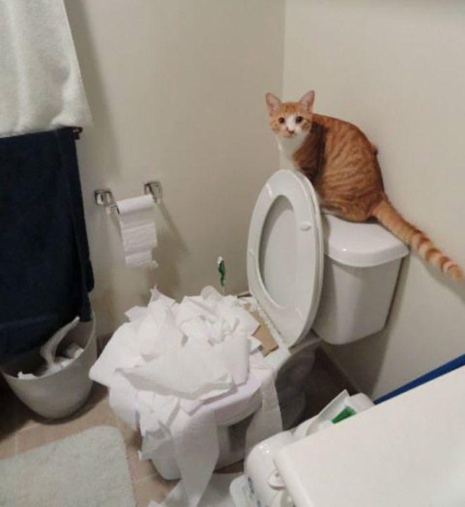Научился пользоваться туалетом дом животные проступок шалость