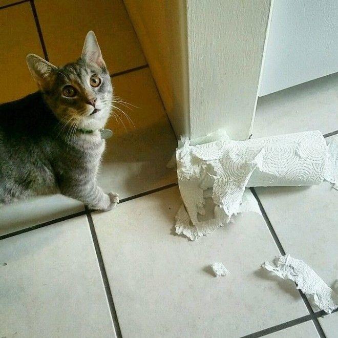 Ежедневная борьба с бумажными полотенцами дом животные проступок шалость