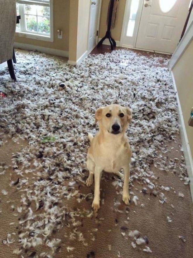 Заведи собаку говорили ониБудет весело говорили они дом животные проступок шалость
