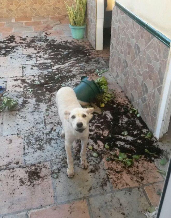 Такой вот садовод дом животные проступок шалость