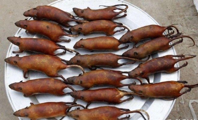 Жареные крысы на блюде Фото newslandcom