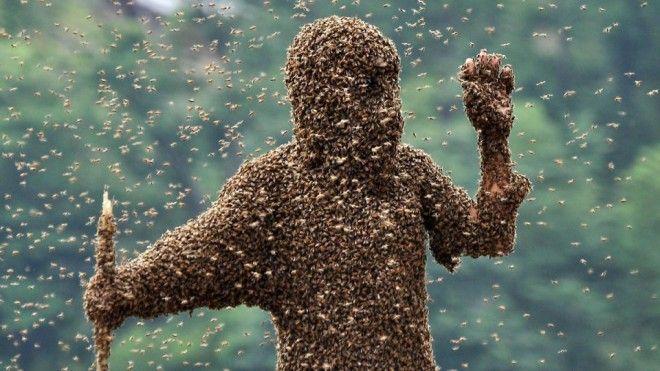 нашествия насекомых Атака африканизированных пчел