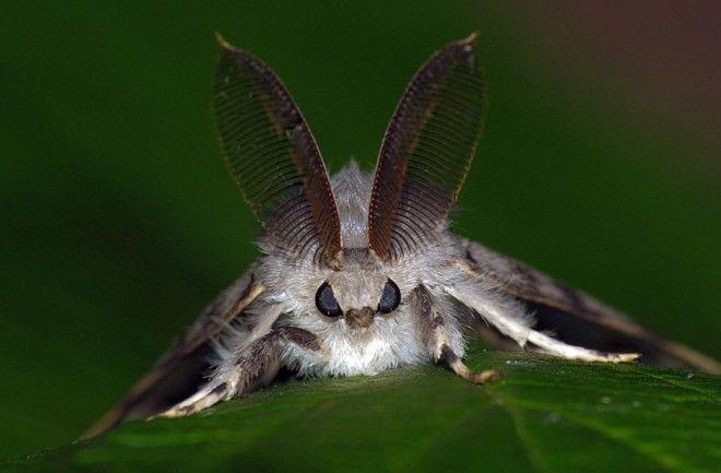 нашествия насекомых Нашествие непарного шелкопряда