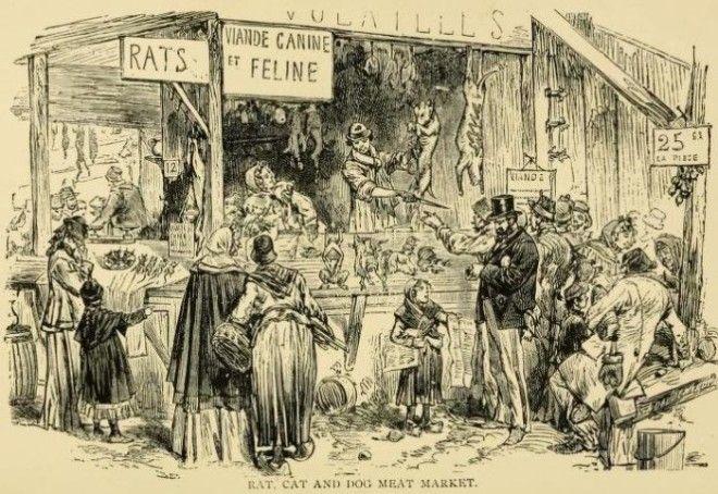Парижский киоск где продавали крыс кошек и собак Фото archiveorg