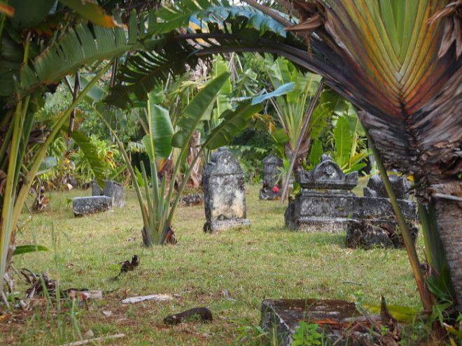 Если бы растительность не убирать то кладбище полностью зарастает высокой травой и деревьями Фото commonswikimediaorg