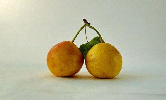 Свежевыжатый сок из яблок и груш