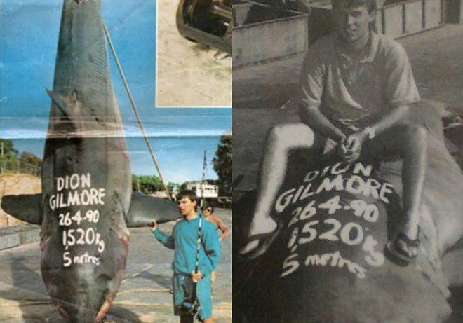 Вес акулы 1520 кг Лавры славы охотника за акулами в 1992 году достались Диону Гилмору У берегов Южной Австралии он вытащил из океана акулу весом 1520 кг и длиной 52 метра